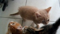 Noisy kittens waiting for dinner